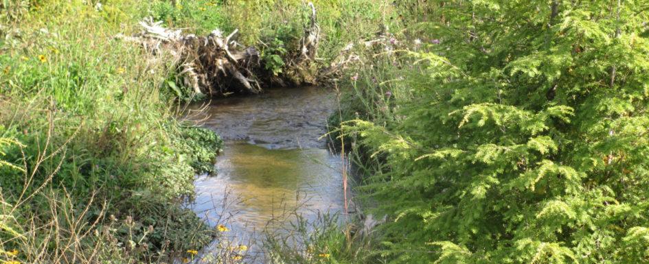 GFA wetland delineation